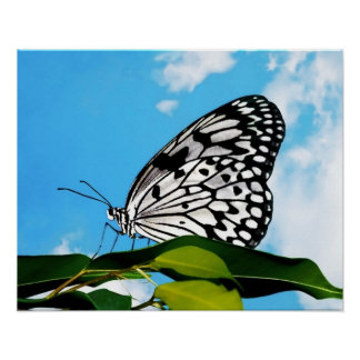 Butterfly & Sky Posters