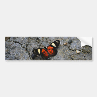 Butterfly Solitaire on Stone Car Bumper Sticker