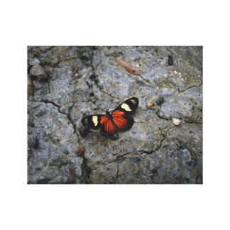 Butterfly Solitaire on Stone Stretched Canvas Print