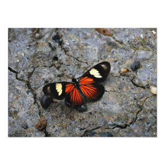Butterfly Solitaire on Stone 5.5x7.5 Paper Invitation Card