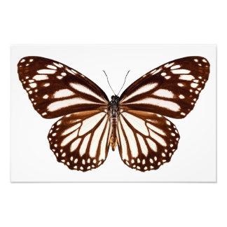 """Butterfly species Danaus melanippus """"White Tiger"""" Impresiones Fotográficas"""
