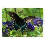 butterfly_spicebush_1769x_Paint Tarjeta De Felicitación