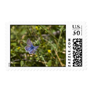 Butterfly Stamp 2