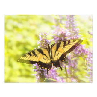 Butterfly - Swallowtail - Hard to swallow Flyer