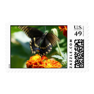 Butterfly Taking Flight Postage Stamps
