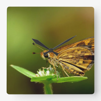 Butterfly Tamil Grass Dart with Bokeh Background Square Wallclocks