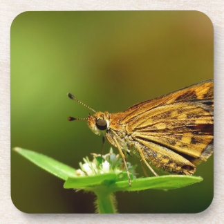 Butterfly Tamil Grass Dart with Bokeh Background Drink Coasters