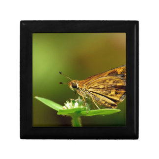 Butterfly Tamil Grass Dart with Bokeh Background Gift Boxes
