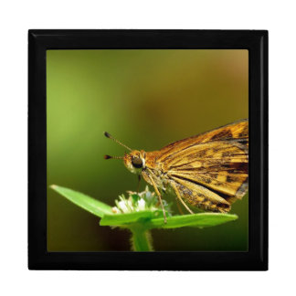 Butterfly Tamil Grass Dart with Bokeh Background Jewelry Boxes