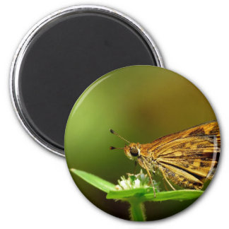 Butterfly Tamil Grass Dart with Bokeh Background Fridge Magnet