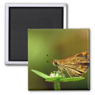 Butterfly Tamil Grass Dart with Bokeh Background Refrigerator Magnet