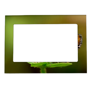 Butterfly Tamil Grass Dart with Bokeh Background Magnetic Photo Frames