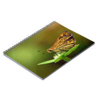 Butterfly Tamil Grass Dart with Bokeh Background Journal