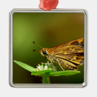 Butterfly Tamil Grass Dart with Bokeh Background Ornament