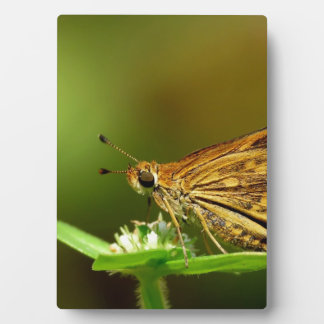 Butterfly Tamil Grass Dart with Bokeh Background Photo Plaques