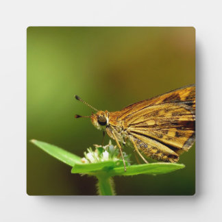 Butterfly Tamil Grass Dart with Bokeh Background Plaques