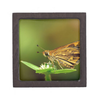 Butterfly Tamil Grass Dart with Bokeh Background Premium Keepsake Boxes