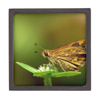 Butterfly Tamil Grass Dart with Bokeh Background Premium Keepsake Box