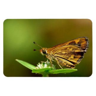 Butterfly Tamil Grass Dart with Bokeh Background Vinyl Magnet