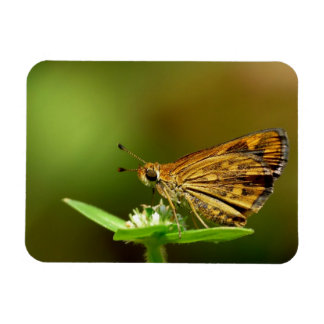Butterfly Tamil Grass Dart with Bokeh Background Rectangle Magnets