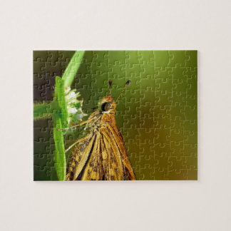 Butterfly Tamil Grass Dart with Bokeh Background. Puzzle