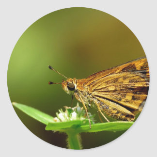 Butterfly Tamil Grass Dart with Bokeh Background Stickers