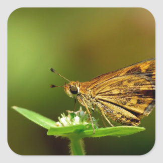 Butterfly Tamil Grass Dart with Bokeh Background Square Stickers