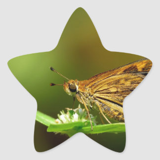 Butterfly Tamil Grass Dart with Bokeh Background Star Stickers