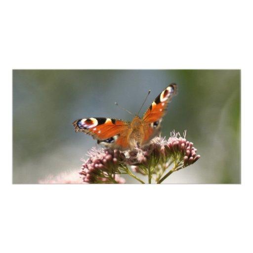 butterfly tarjeta fotográfica personalizada