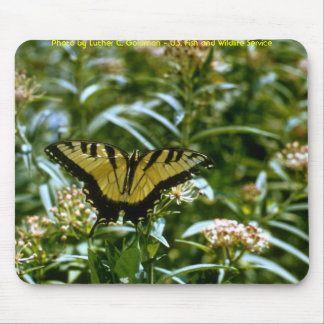 Butterfly - Tiger Swallowtail Mouse Mats