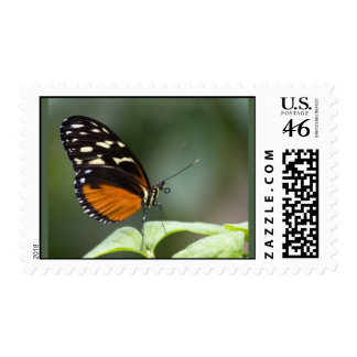 Butterfly Tongue Postage Stamp