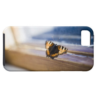 Butterfly trying to get out Sweden iPhone 5 Cases