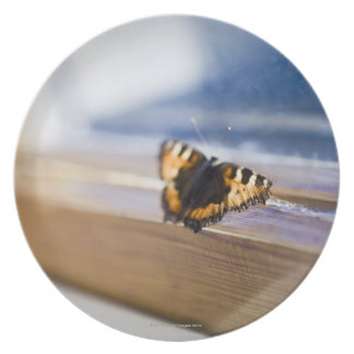 Butterfly trying to get out, Sweden. Dinner Plate