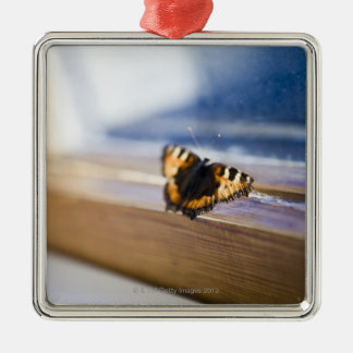 Butterfly trying to get out, Sweden. Metal Ornament