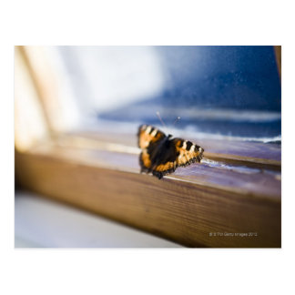 Butterfly trying to get out, Sweden. Postcard
