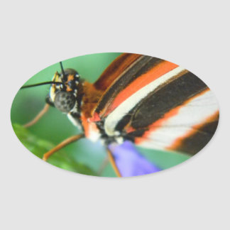 Butterfly Up Close and Personal Oval Sticker