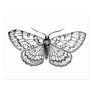 butterfly vintage illustration postcard