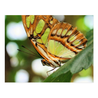 Butterfly Watching Nature Photography Postcard