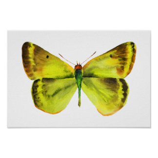 Butterfly Watercolor Painting Poster