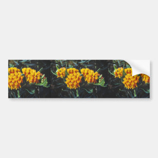 Butterfly weed bumper stickers