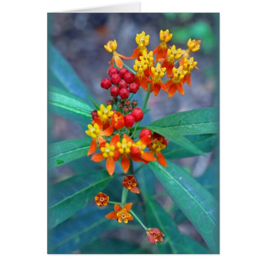"""Butterfly weed"" Card"