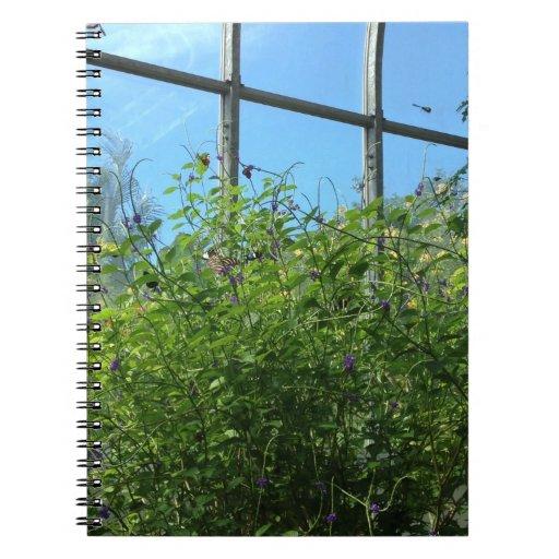 Butterfly windows note books