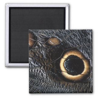 butterfly wing 2 inch square magnet