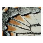 Butterfly Wing Postcard