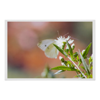 Butterfly with Plant Photo Poster