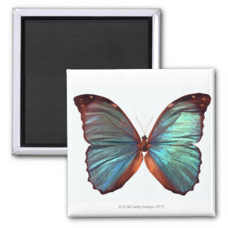 Butterfly with wings spread 2 2 inch square magnet