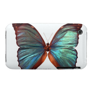 Butterfly with wings spread 2 Case-Mate iPhone 3 cases