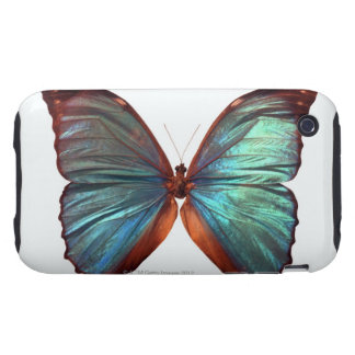Butterfly with wings spread 2 tough iPhone 3 covers