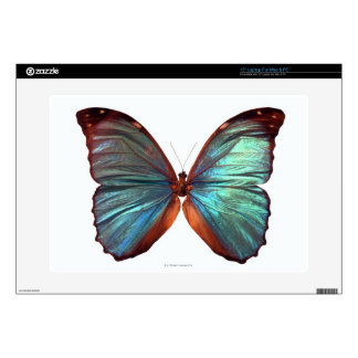 """Butterfly with wings spread 2 decal for 15"""" laptop"""