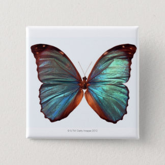 Butterfly with wings spread 2 pinback button